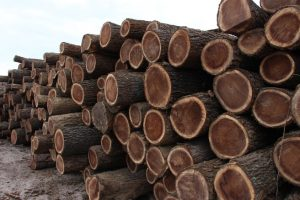 pile of logs at mill